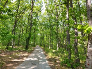 пътят през гората
